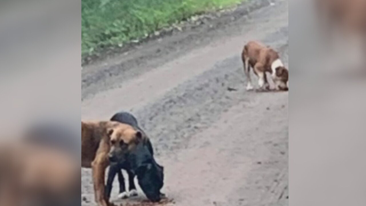 Animal Rescue Group Says 2 Dogs Shot In Muskogee County, Third Dog Missing