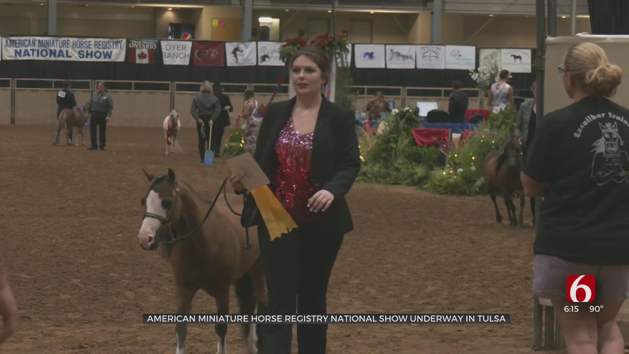 American Mini Horse National Show Coming To Tulsa Fairgrounds