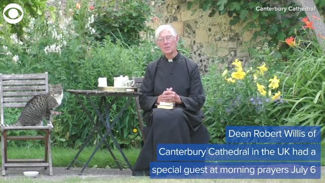 Watch: Cat Steals The Show During Morning Prayers In Canterbury Cathedral Gardens