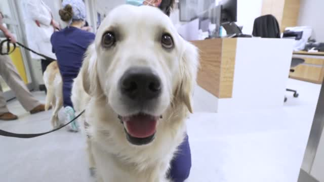 Hospital Launches Program To Bring Therapy Dogs To COVID Floors For Health Care Staff