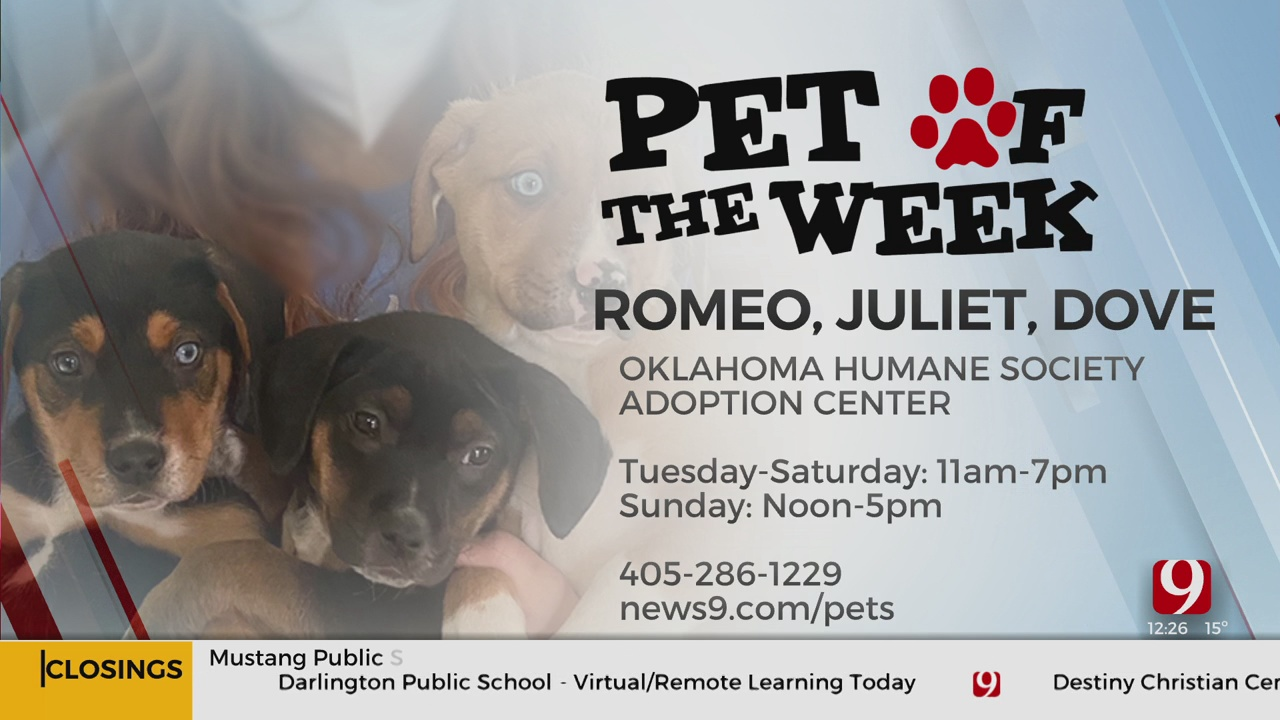 Pets Of The Week: Romeo, Juliet And Dove
