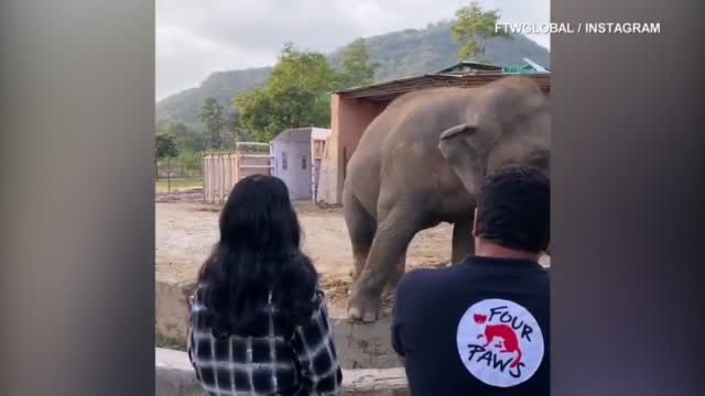 Cher Helps Kaavan The Lonely Elephant Find A New Life, Maybe Even Love, After A Grim 35 Years