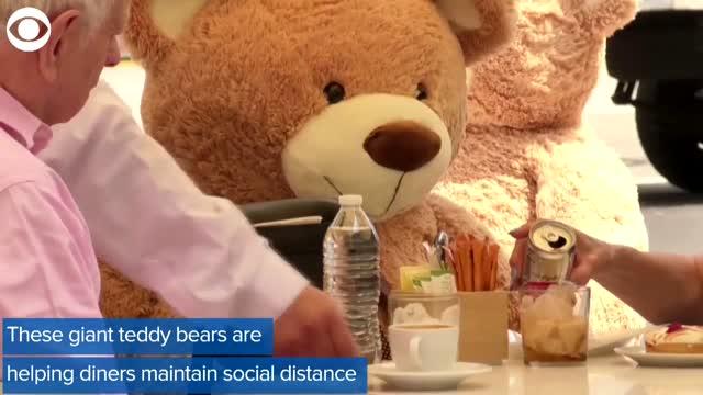 WATCH: Teddy Bears Help Diners Practice Social Distancing