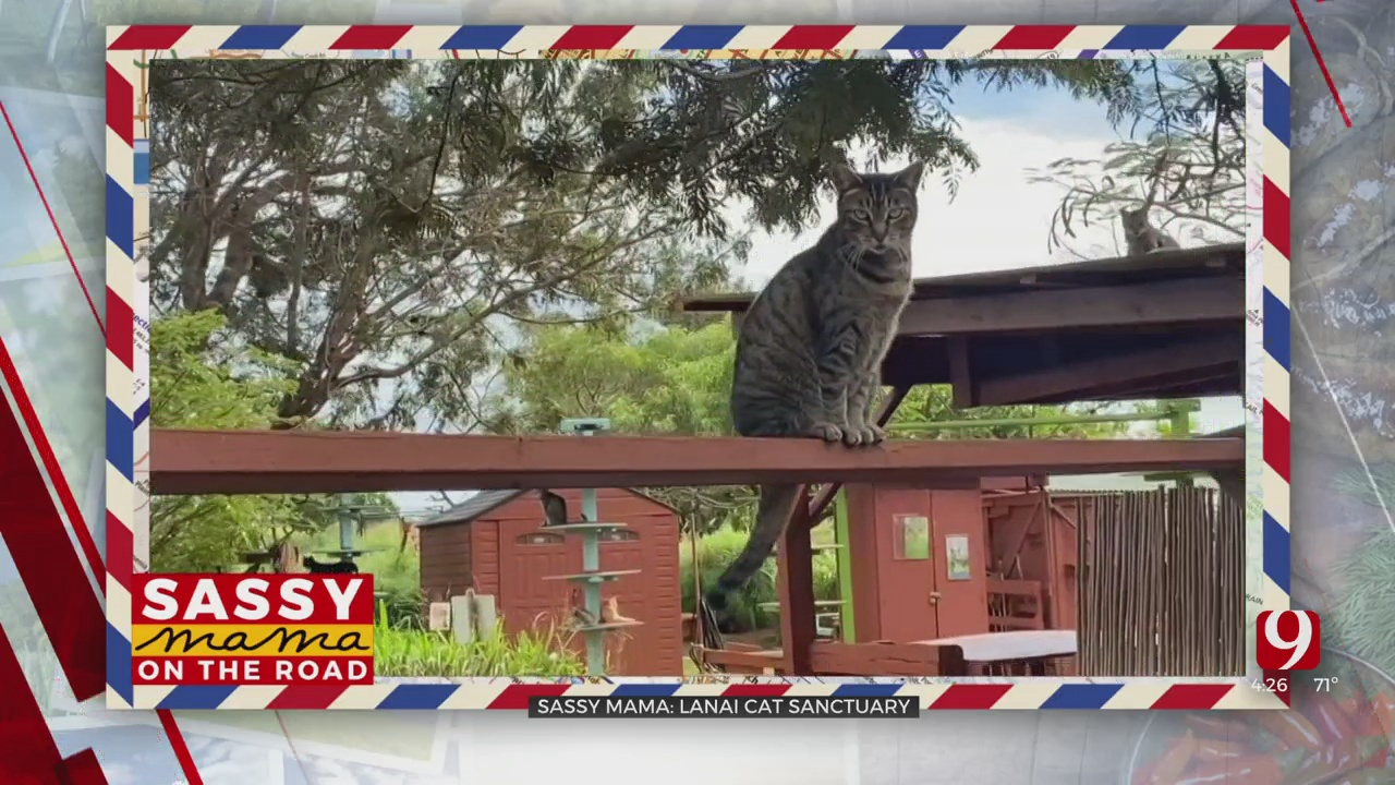 Sassy Mama On The Road: Lanai Cat Sanctuary