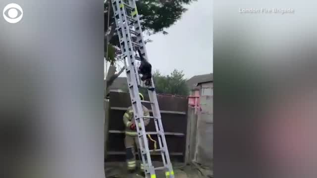 WATCH: Cat Climbs Down From Tree Using Rescue Ladder