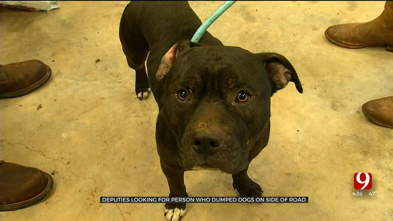 Puppies In Pottawatomie County Abandoned In Ditch