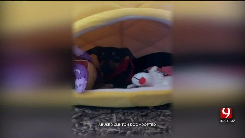WATCH: Abused Clinton Puppy Finds Forever Home