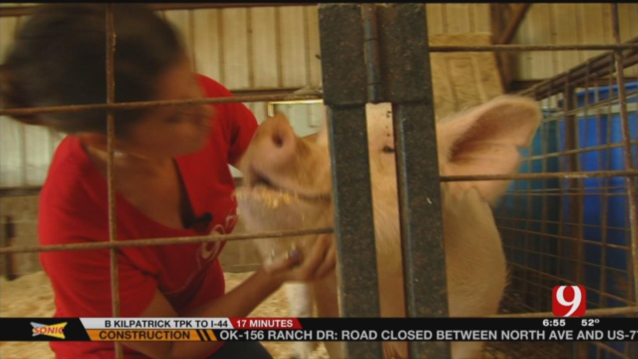 Meteorologist Lacey Swope Kisses A Pig For A Good Cause