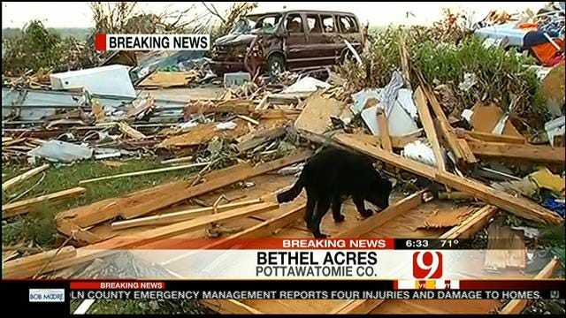 Debris, Lost Dogs At Devastated Mobile Home Park