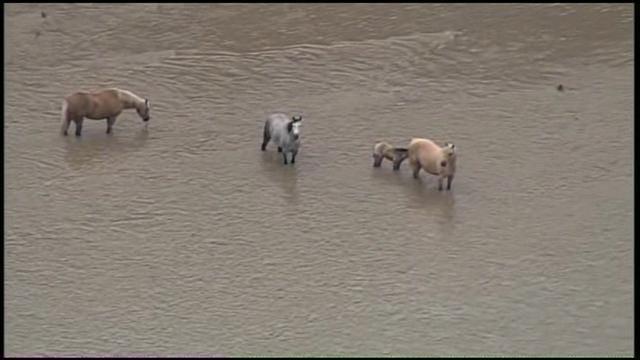 Osage SkyNews 6: Flooding East Of Henryetta