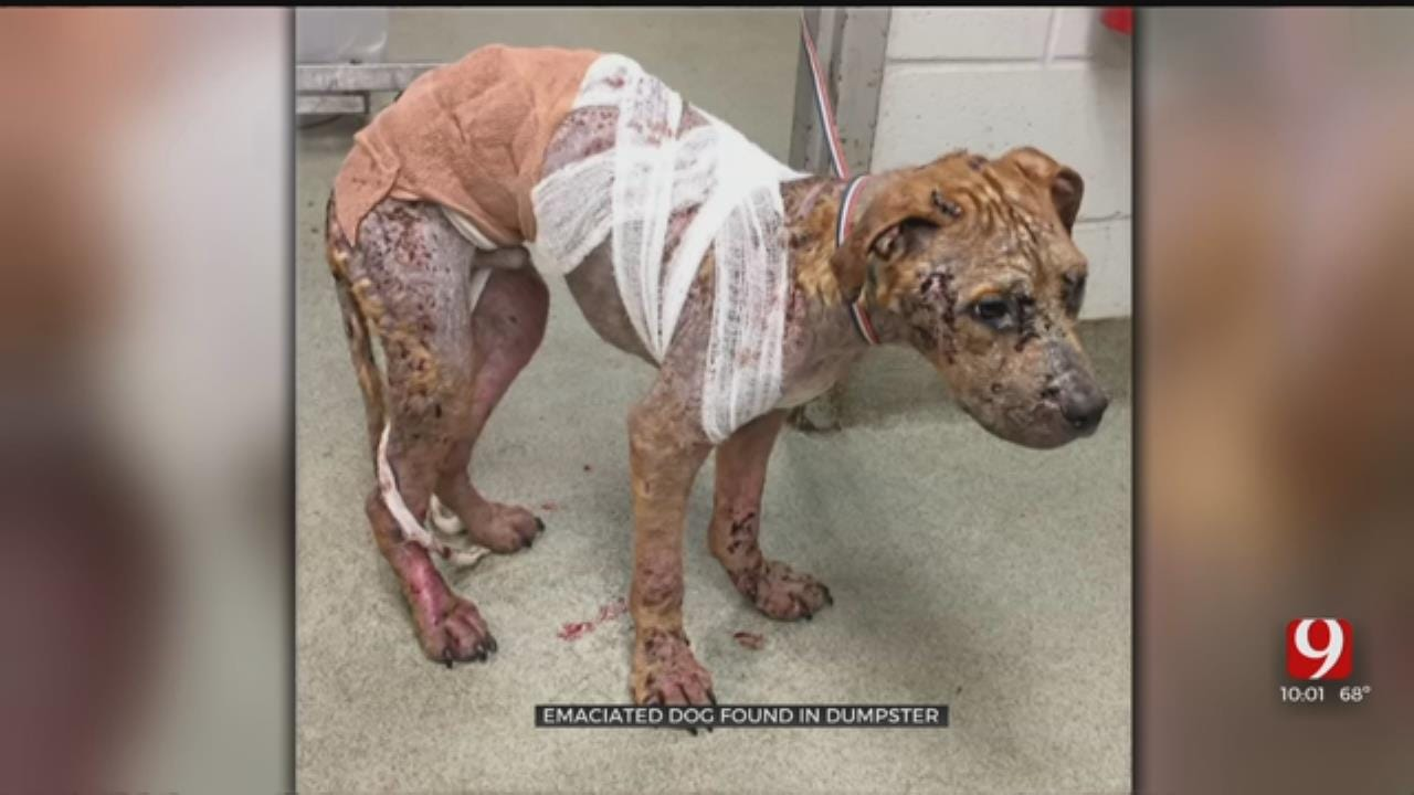 Emaciated Dog Found In Oklahoma City Dumpster