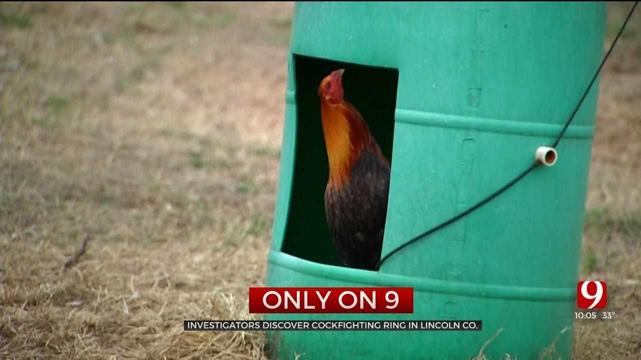Only On 9: Cockfighting Ring Discovered Near Harrah When Officers Served A Search Warrant