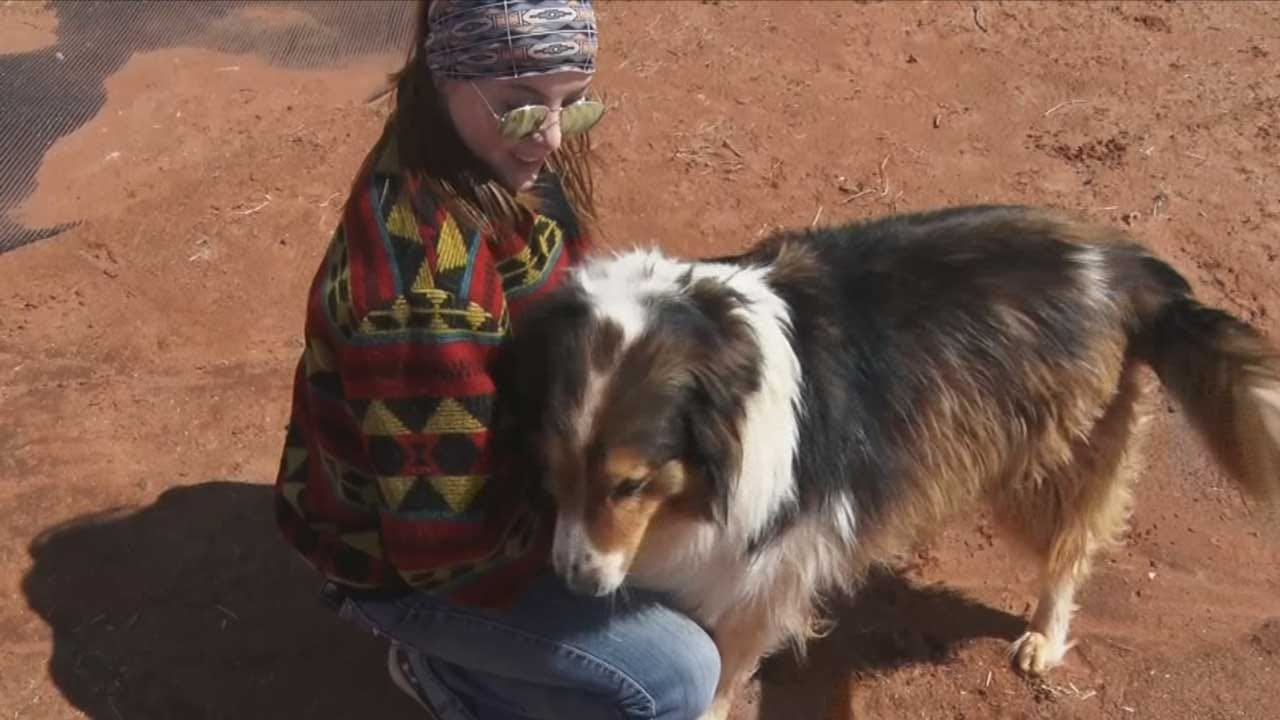 Oklahoma Rescue Collecting Damaged Trampolines For Animals