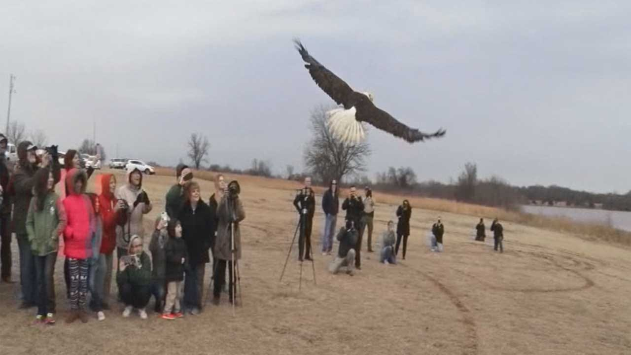 WATCH: Bald Eagle Rescued By Oklahoma Family Released 4 Months Later