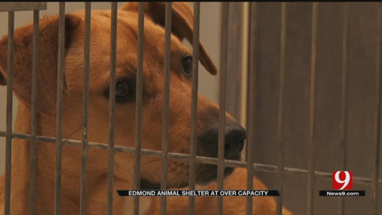 Edmond Animal Shelter Is Over Capacity; Asking For The Public's Help