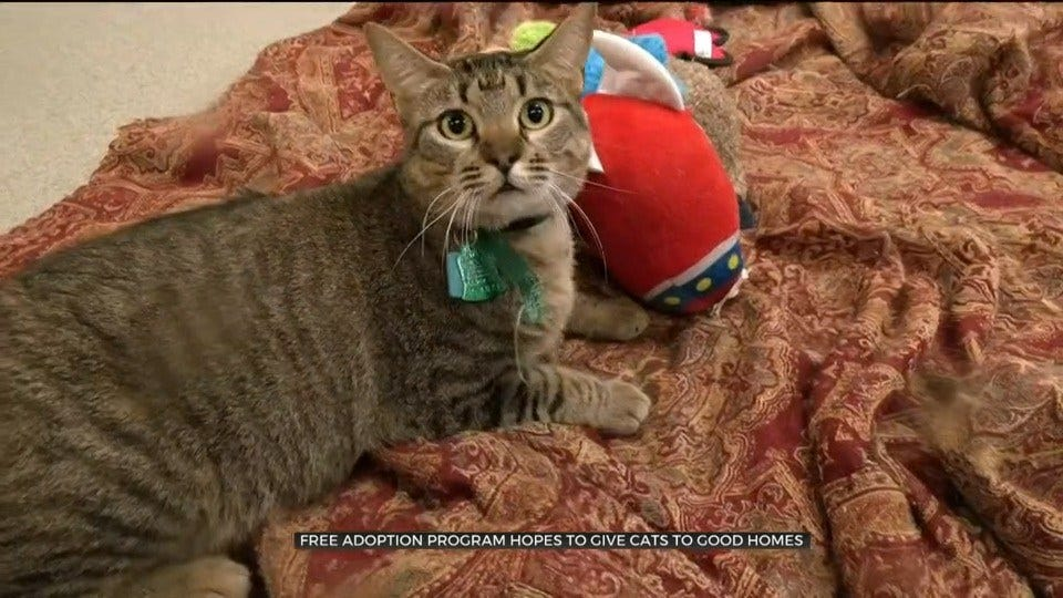 More Than 100 Cats Adopted During OKC Animal Shelter's Free Adoption Weekend