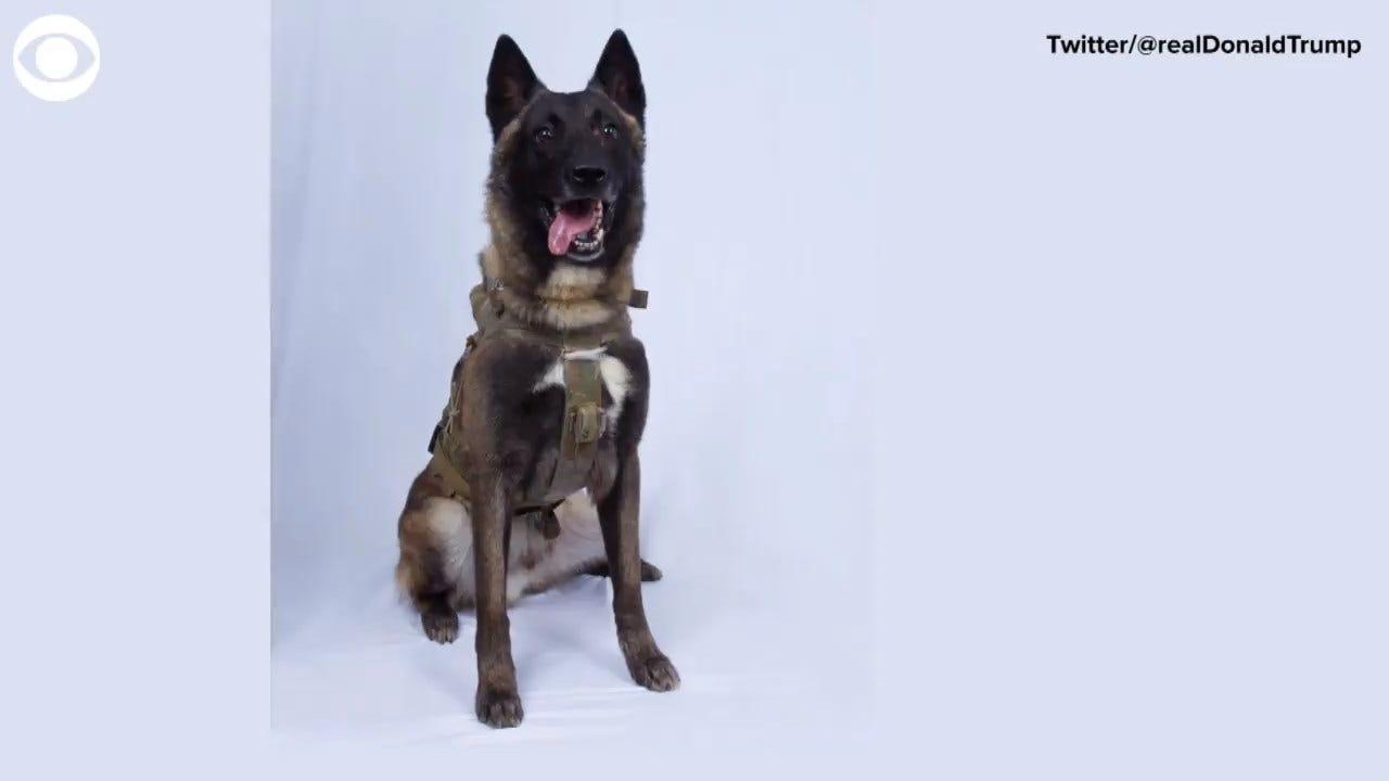 President Trump Tweets Photo Of Heroic Dog Wounded In Al-Baghdadi Raid