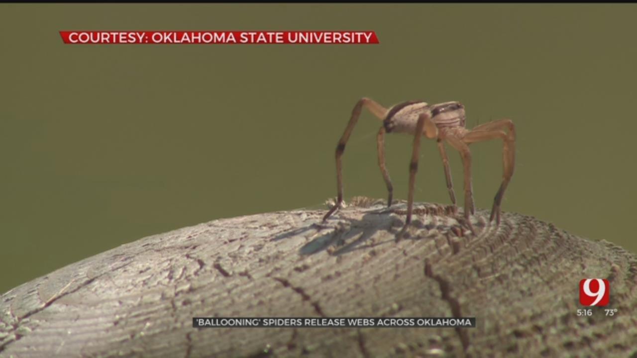 'Ballooning' Spiders Releasing Webs Across Oklahoma