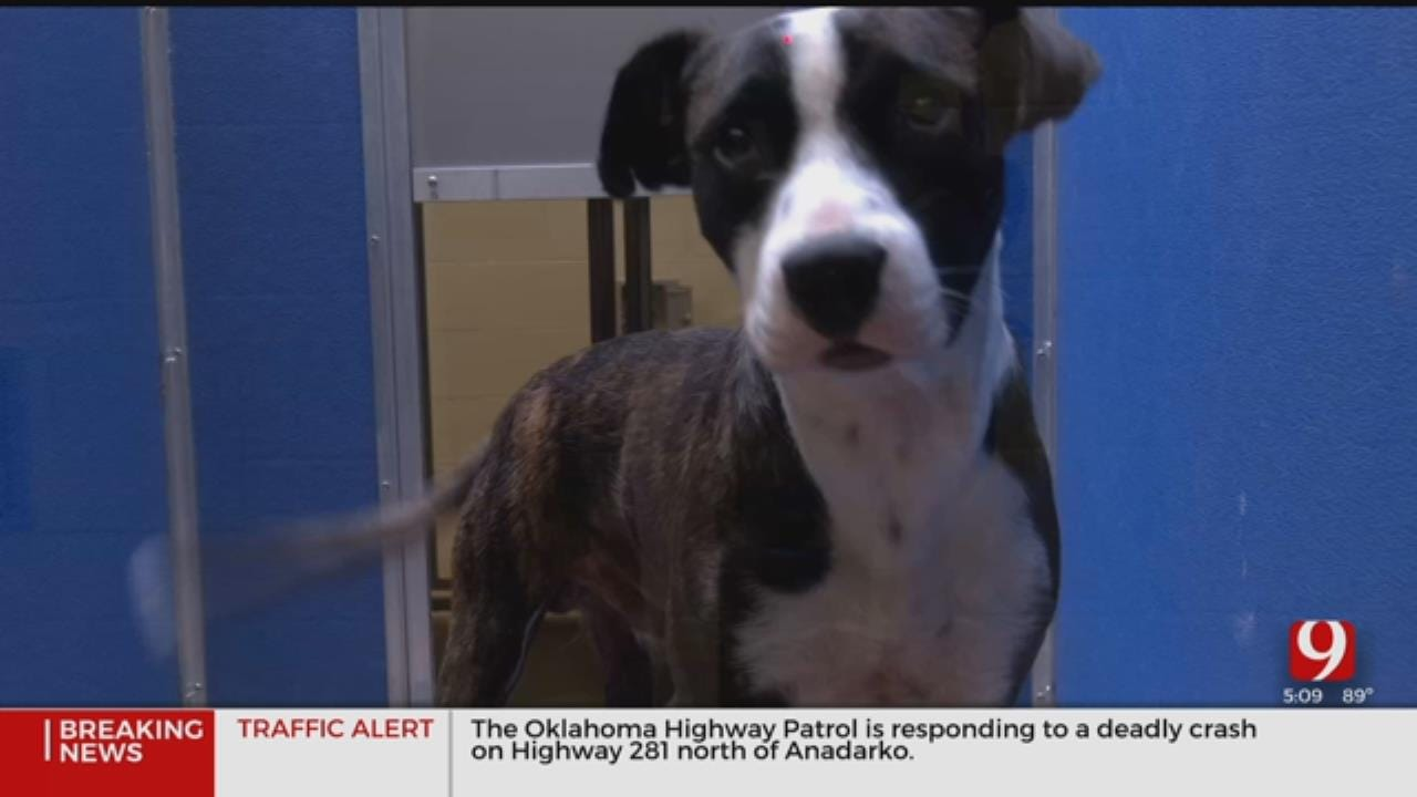 Ordinance Making It Illegal To Tie, Chain Or Tether Animals Takes Effect In Norman