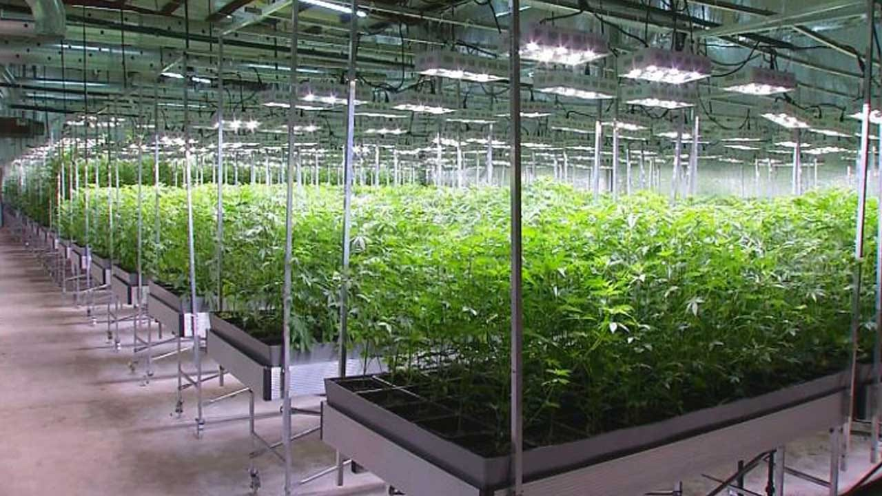Medical Marijuana Unity Law To Take Effect Thursday