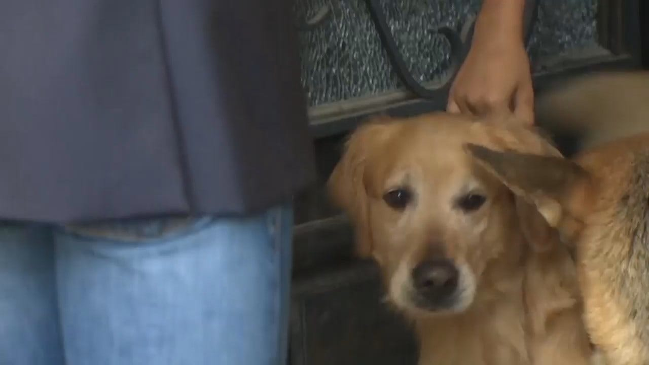 Dog Stolen From Family During Road Trip Rescued By Local CBS Reporter