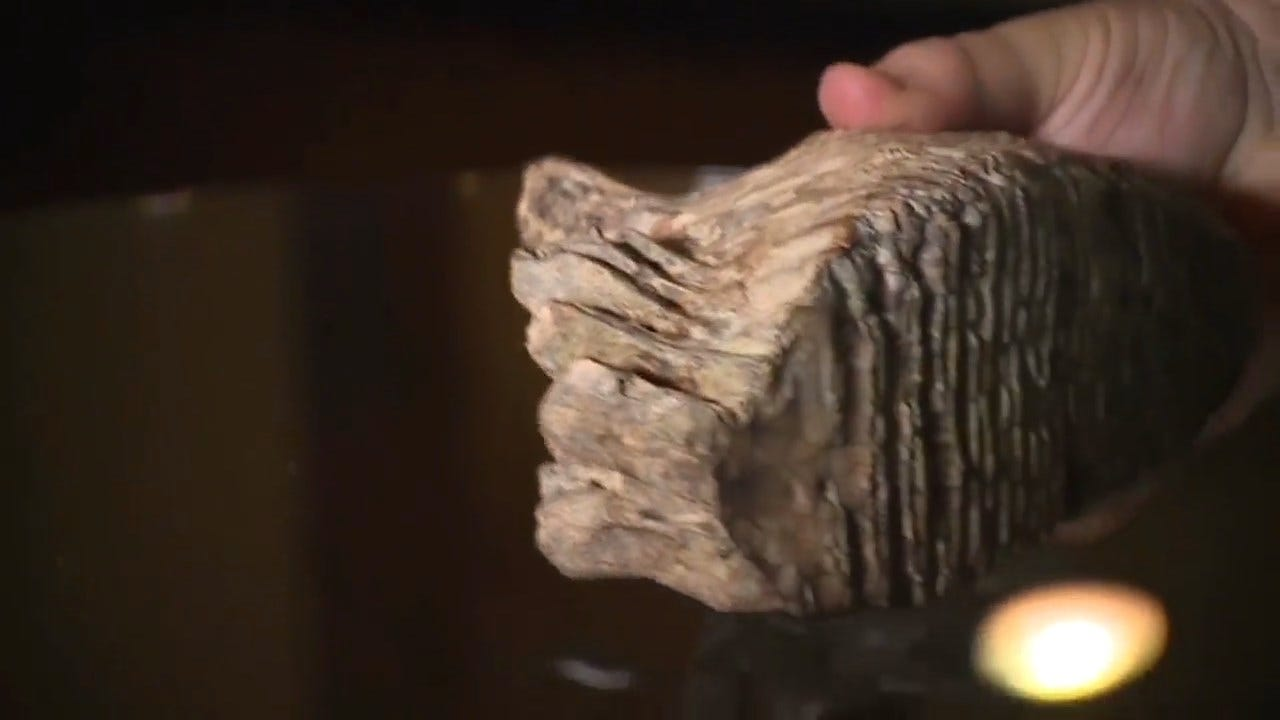 12-Year-Old Discovers Apparent Woolly Mammoth Tooth While On Vacation In Ohio