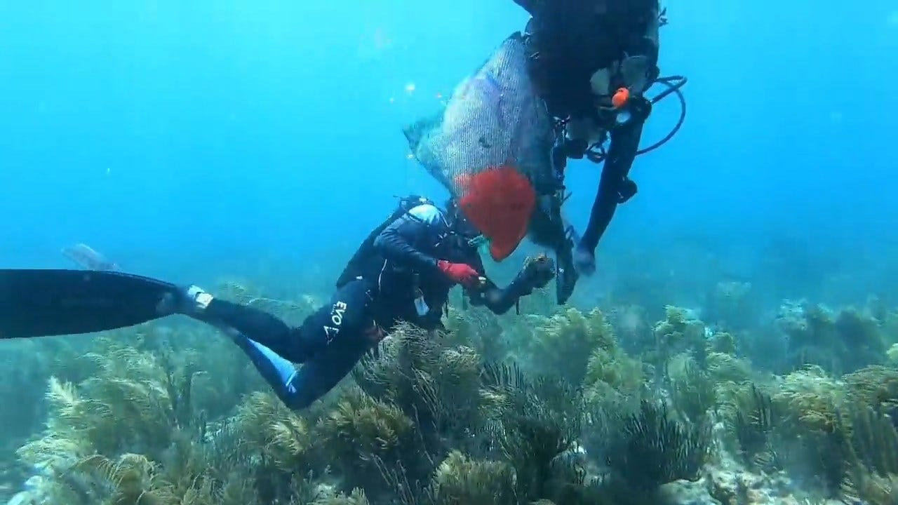 Scientists Race To Save Gulf Coast Coral Ravaged By Mysterious Underwater Disease