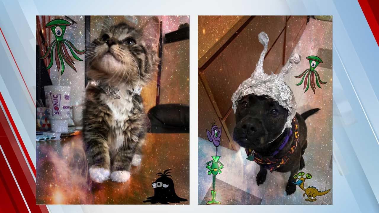 OKC Animal Welfare Holds 'Storm The Shelter' Event After Viral Social Media Post