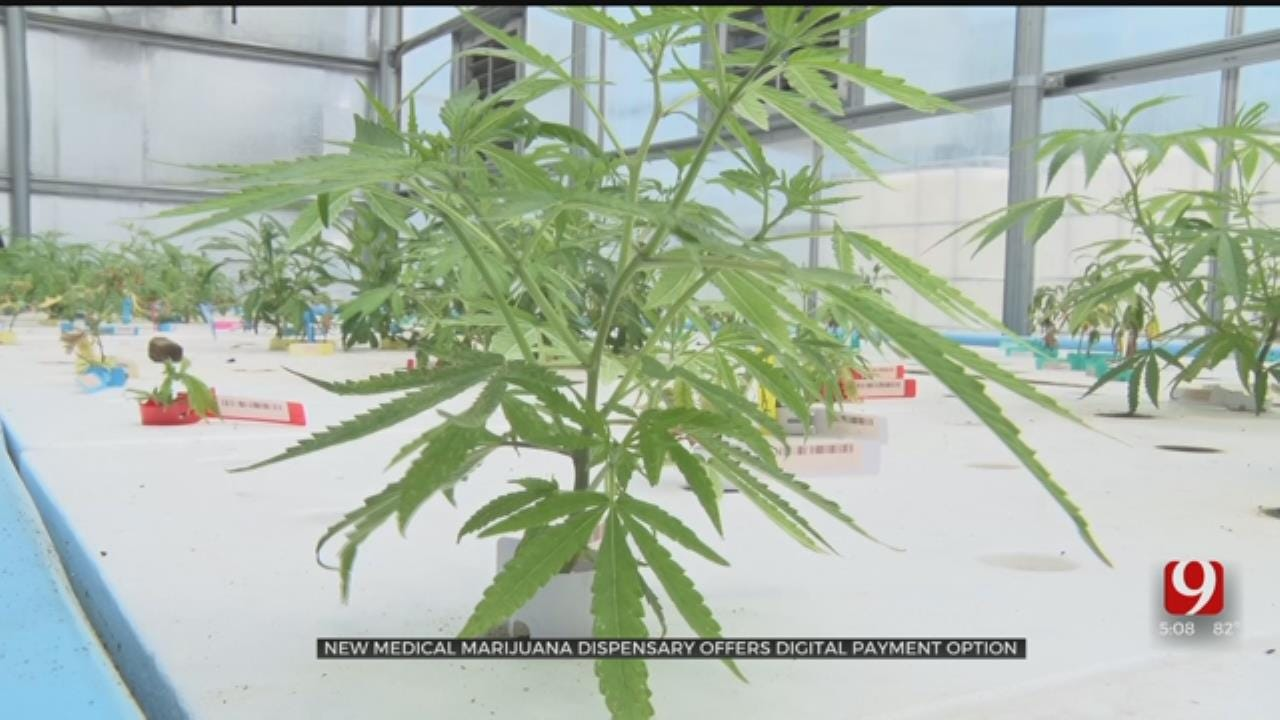 New Medical Marijuana Dispensary Is 1st In State To Accept Cash-Free Payments