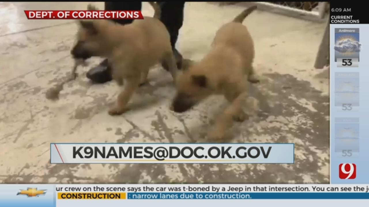 ODOC Asking For Public's Help Naming Narcotics Puppies