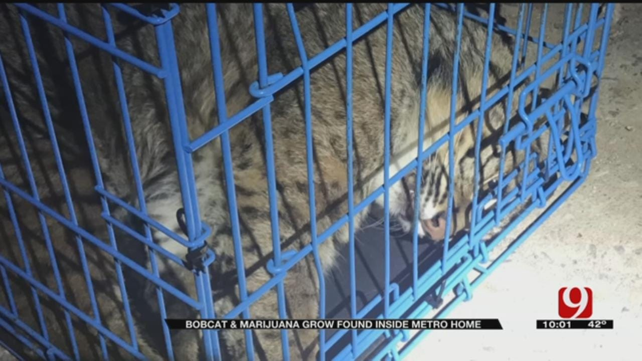 Thousands Of Dollars-Worth Of Property Seized, Including Bobcat After Search Of OKC RV Park