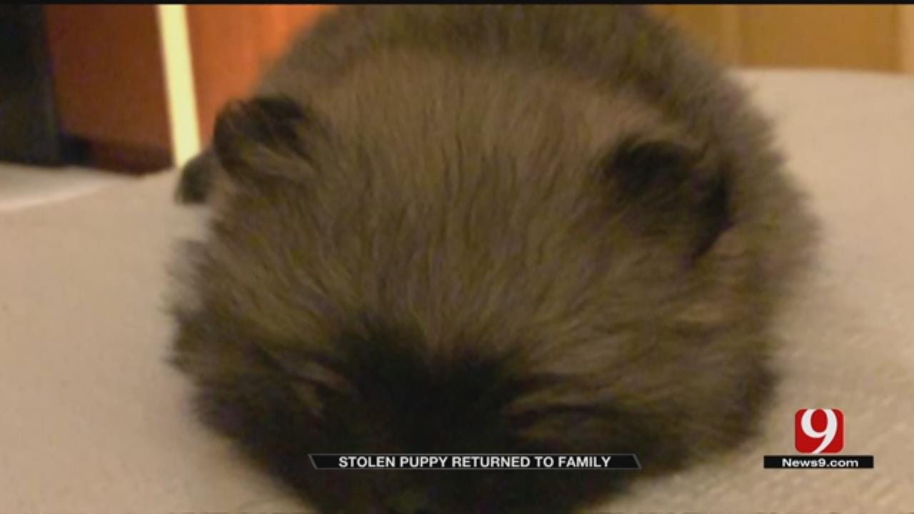 Stolen Puppy Returned To Army Soldier's Family
