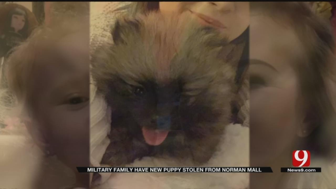 Army Soldier's Family Searching For Puppy Stolen From Sooner Mall
