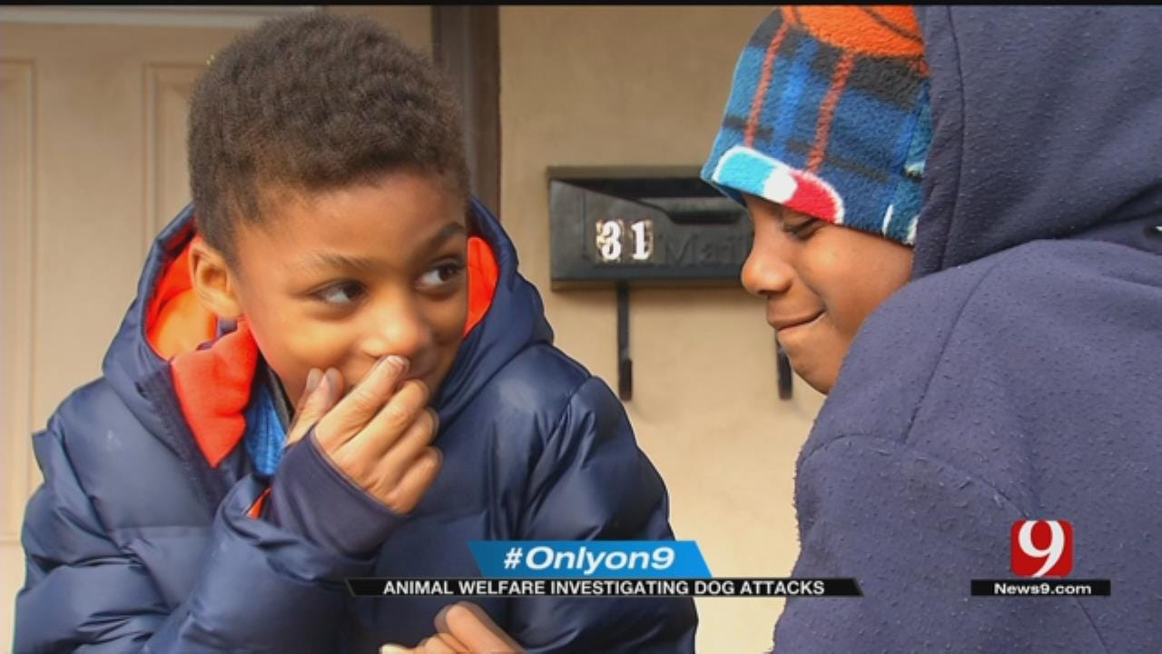 OKC Animal Welfare Investigating After Kids Attacked By Dogs
