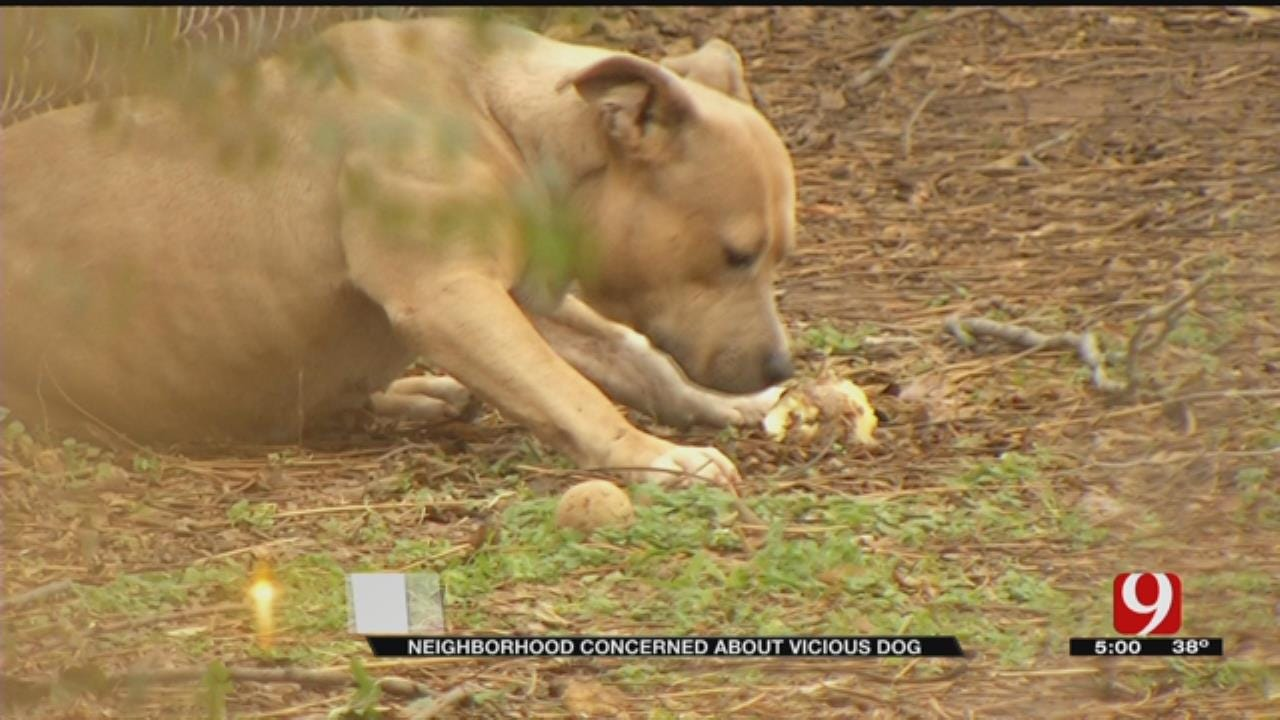 Man Fears Pit Bull Will Hurt Or 'Kill Someone' In NE OKC Neighborhood