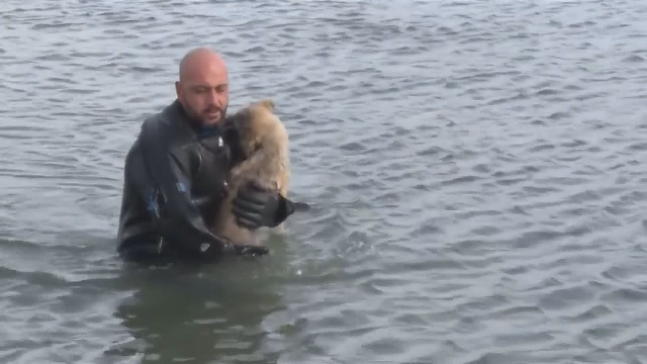Police Diver Rescues Puppy On Frozen Lake
