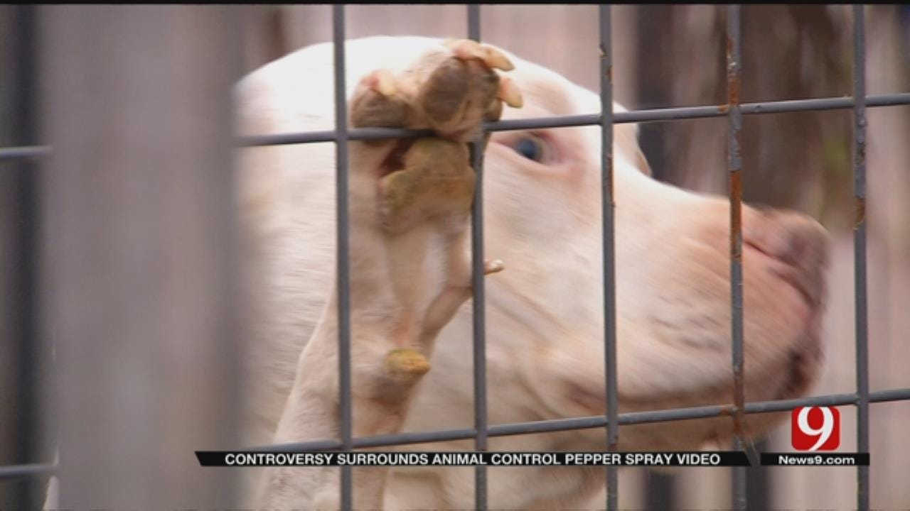 El Reno Dog Owners Accused Animal Control Of Harming Dogs
