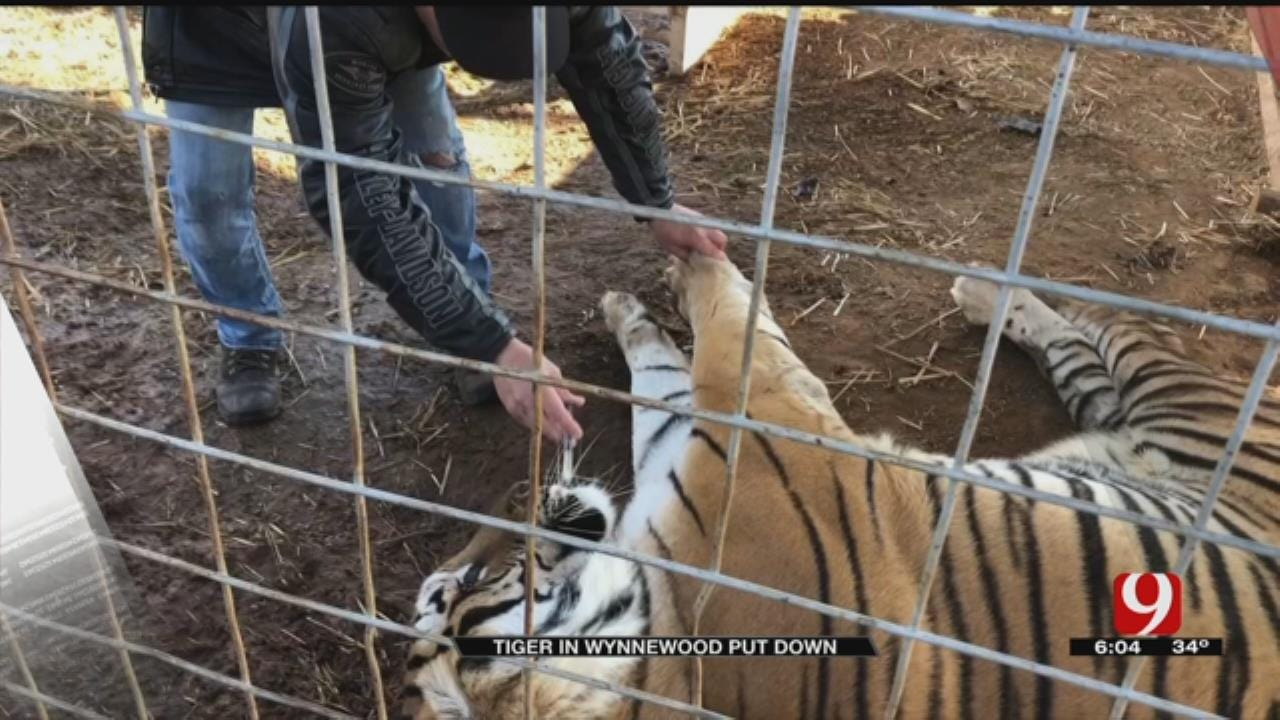 Wynnewood Tiger Put Down After Spinal Condition Discovered