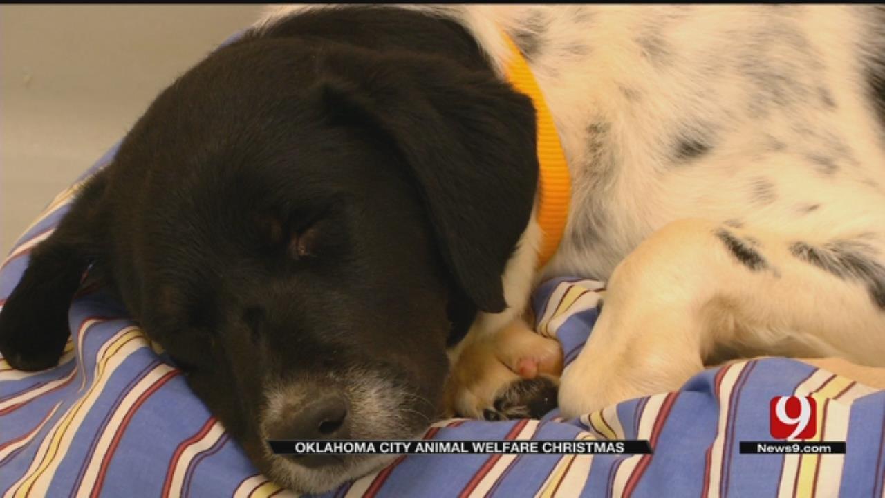 OKC Animal Welfare Reduces Adoption Fees For The Holidays