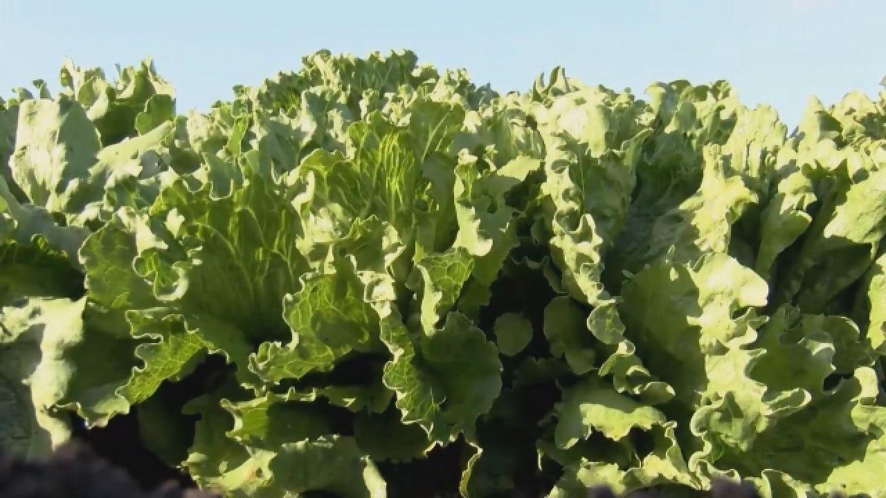 FDA Zeros In On Source Of E. Coli Outbreak In Romaine Lettuce; More Illnesses Reported