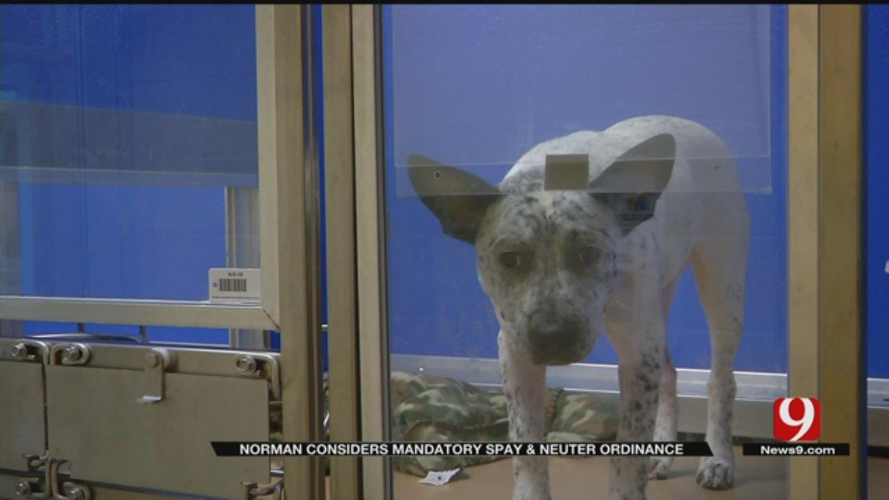 Norman Considering Mandatory Spay And Neuter Ordinance