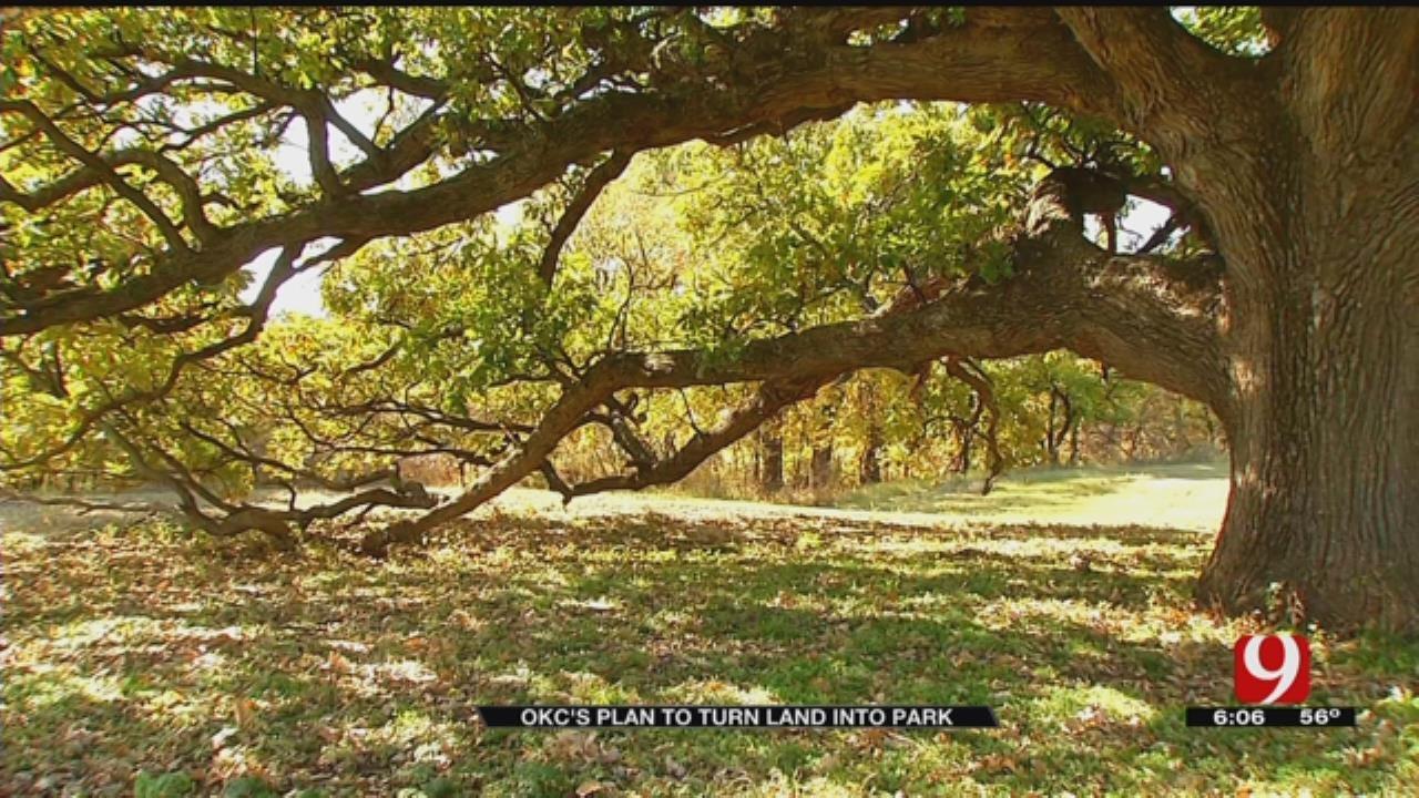 OKC Hopes To Help Preserve Historic Tree With New Park