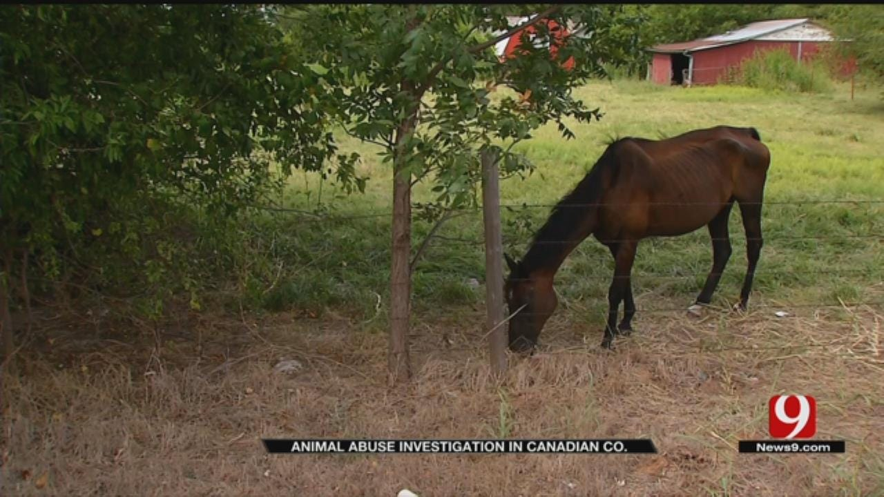 Animal Abuse Investigation Underway In Canadian County