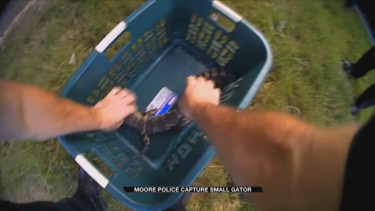 Body Camera Video Show Police Respond To Reported Lurking Gator