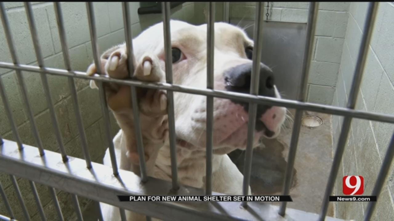 Voters Approve Bond For New Animal Shelter In MWC
