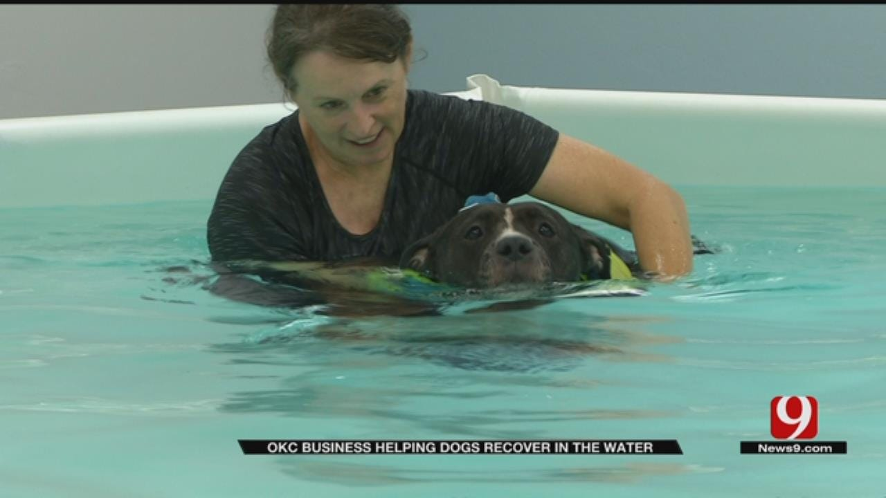 Metro Business Helping Dogs Recover In The Water