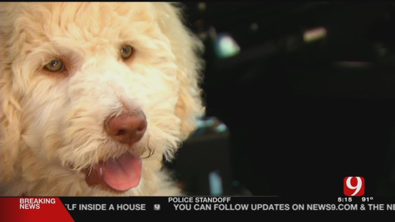 EMSA Trains 1st Therapy Dog For OKC Metro