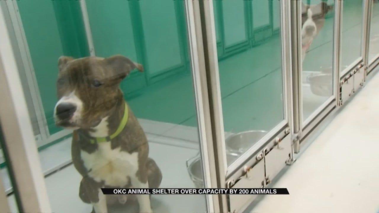 OKC Animal Welfare: Adoptions, Volunteers And Donations Needed