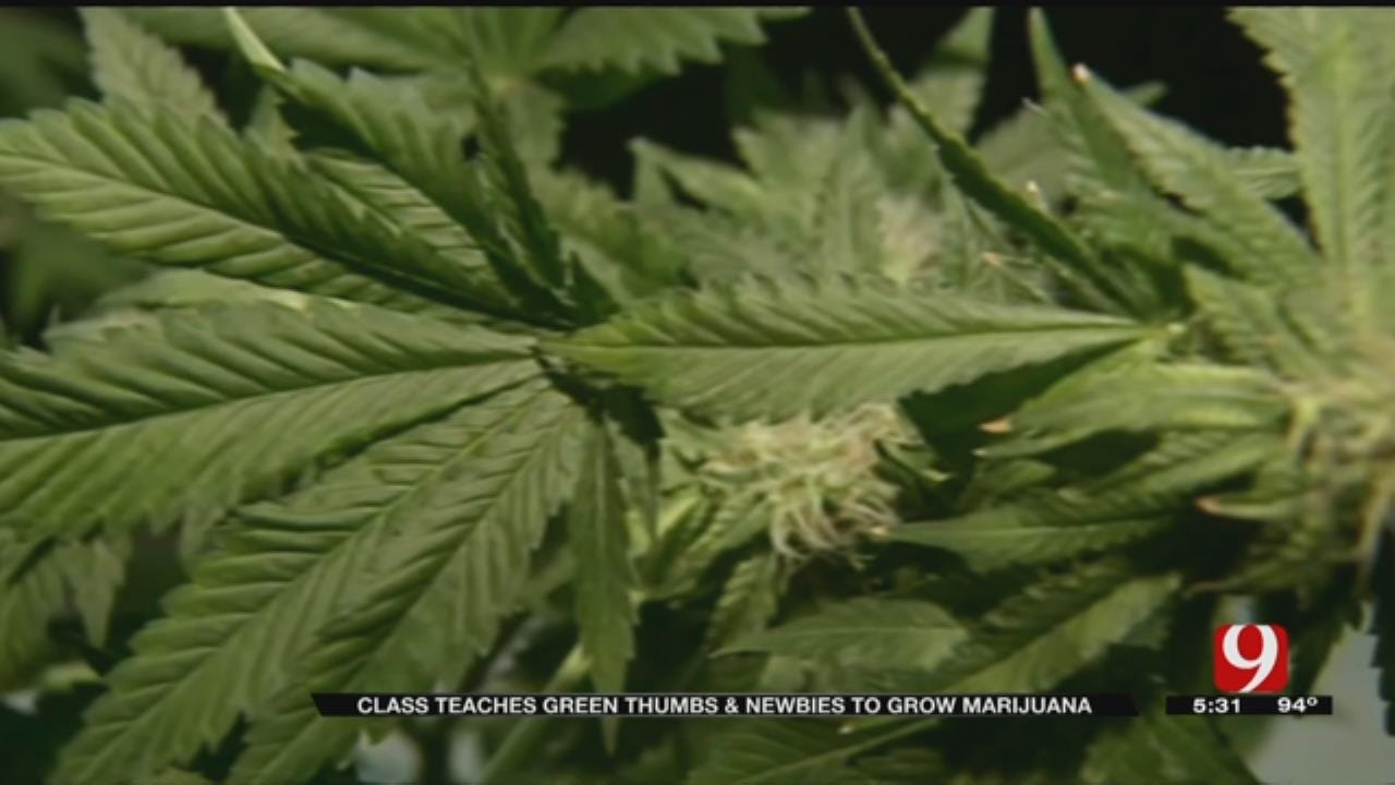 Dozens Gather In MWC For Crash Course In Growing Cannabis