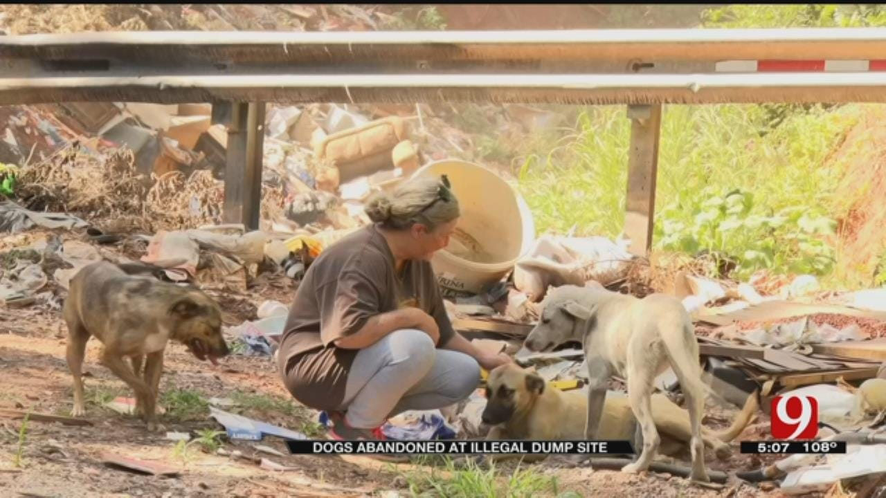 Locals Step In To Help Dogs Abandoned At Pott. County Dump Site